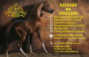 Обучение верховой езде,  прогулки в поля,  фотосесии , простой лошадей,